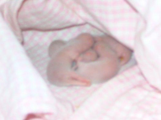 les bébés: 2 jours