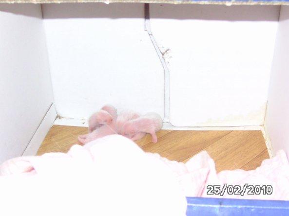 les bébés grandissent vite