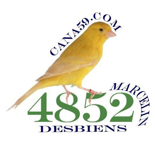 Ma passion l'élevage et les expositions de canaris couleurs