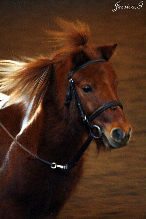 Qualification Poney Passion, dimanche 19 decembre 2010