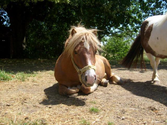 La vie de poney ;)
