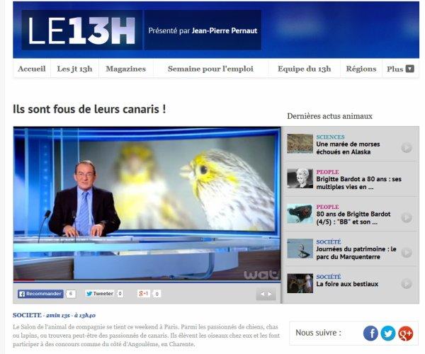 REPORTAGE SUR CANARIS AU JOURNAL DE 13H DE TF1 DU 3 OCTOBRE 2014