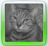 mes-animaux-du-16800