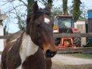 Photo de The-paradise-horses