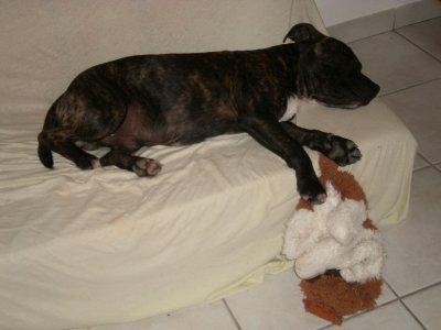 Faya a un peu plus que 8mois et ses 18 bon kg