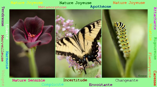 Et vous? Quelle est votre nature??