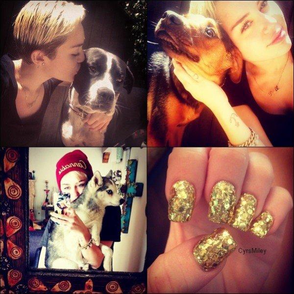 Une nouvelle photo d'un photoshoot de Miley subllime est apparue il y a peu de temps