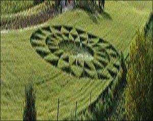 Crop-circle chez moi