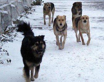 Ces chiens étaient ils des anges ?