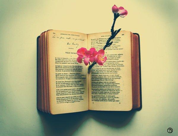 ❤ Remerciment et Livre d'Or ❤