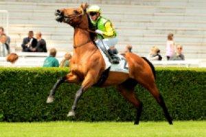 mardi 3 mars 2015 - chantilly 16 chevaux mais 13 partant résultat 2 15 8 14 10