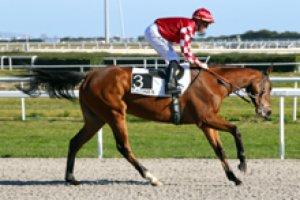 jeudi 5 mars 2015 - deauville 16 chevaux plat 1900 mètres