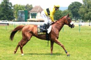 lundi 16 mars 2015 compiègne plat 16 chevaux - résultat    7  15  4  11  8