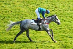 dimanche 22 mars 2015 auteuil obstacle steeple 20 chevaux le numéro 13 est non partant