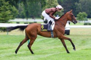mardi 5 mai 2015 saint cloud plat prix dunette 2100 mètres 16 chevaux résultat  13  7  1  2  4