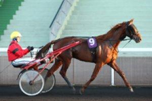 samedi 9 mai 2015 vincennes trot attelé prix du gatinais 14 chevaux
