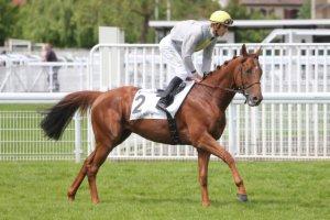 lundi 8 juin 2015 - longchamp 14 chevaux non partant le 14 - 2000 mètres arrivée  8 7 4 15 6