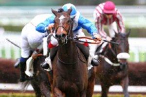 mercredi 10 juin auteuil haies 15 chevaux rfésultat 4 5 7 11 3