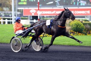 vincennes samedi 5 déecmbre 2015 trot attelé 18 chevaux