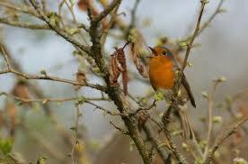 4h30 c'est le printemps printemps les oiseaux chantent l'amour revient...bonne journée claude alain
