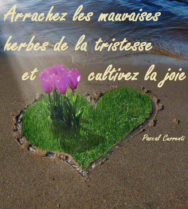 Bon Lundi Et Bonne Semaine à Vous Tous Et à Vous Toutes L