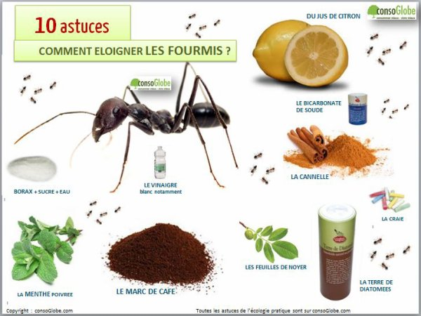 La chasse aux fourmis l cinquantaine harmonie for Anti fourmi naturel maison