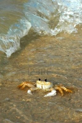 The Wondrous Crab and Waves