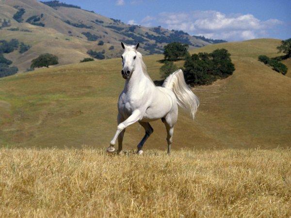 2014 Ano  do cavalo. Regente Júpiter, Liberdade, Forca, Fé, Megas conclusões.
