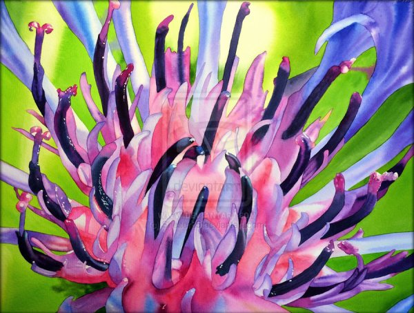 AQUARELA,Cirsium flower