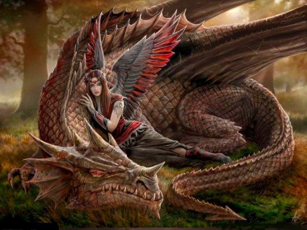 Dragão Meigo