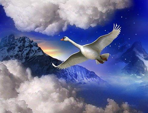Sobrevoar as sensacões de sonhos e realidades