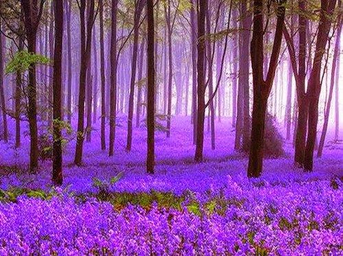 Bluebell Amanhecer, Inglaterra
