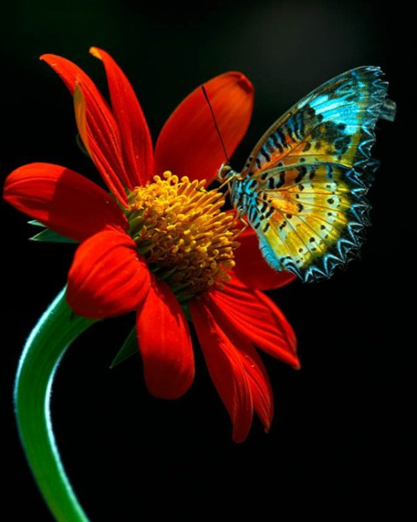 JARDINAGEM,Blue Butterfly on The Red Flower