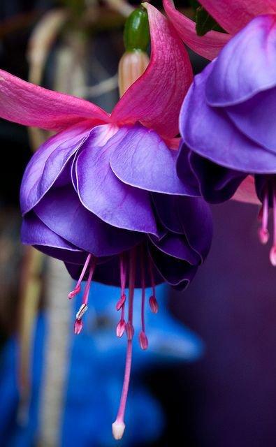 SAGRADO JARDIM lovely colors
