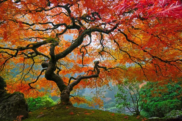SAGRADO Jardim, Arvore a grande amiga do planeta Terra.