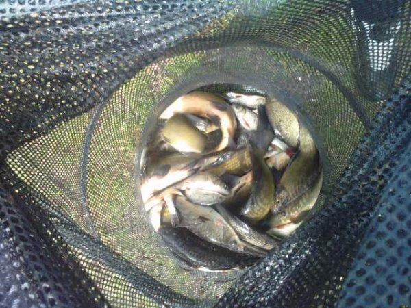 La pêche a recommencé !!!!