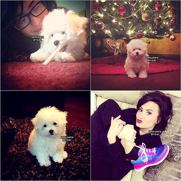 16.12.2014 - Demi a posté des photos et deux vidéos (1 & 2) sur instagram. Elle a eu un chiot qui s'appelle Buddy.