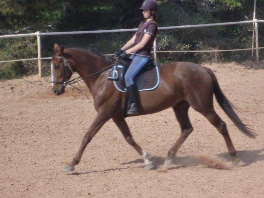 Pour parler à un cheval, il n'y a pas besoin de mots. C'est une étreinte charnelle qui alimente nos rêves... ♪