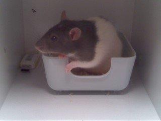 Mon rat !! :) wiz <3