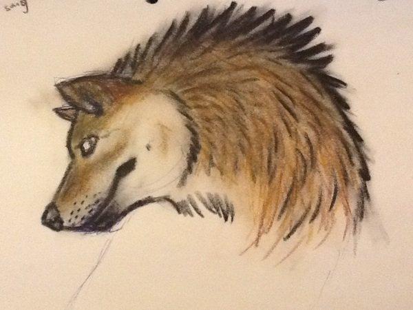 Un loup ^^