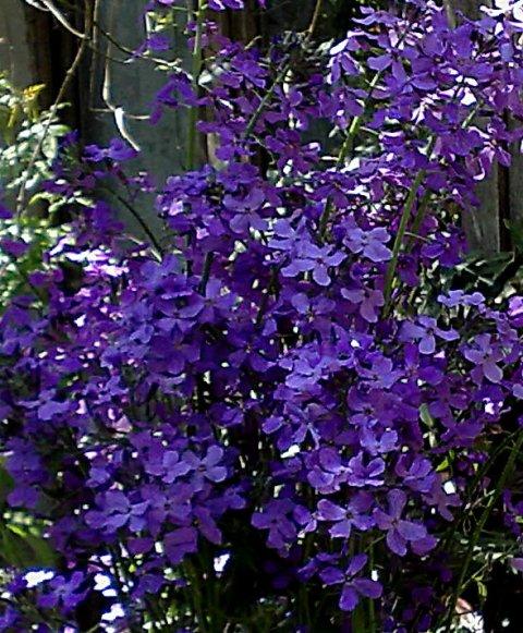 Julienne de Mahon... - Blue-&-Perfume