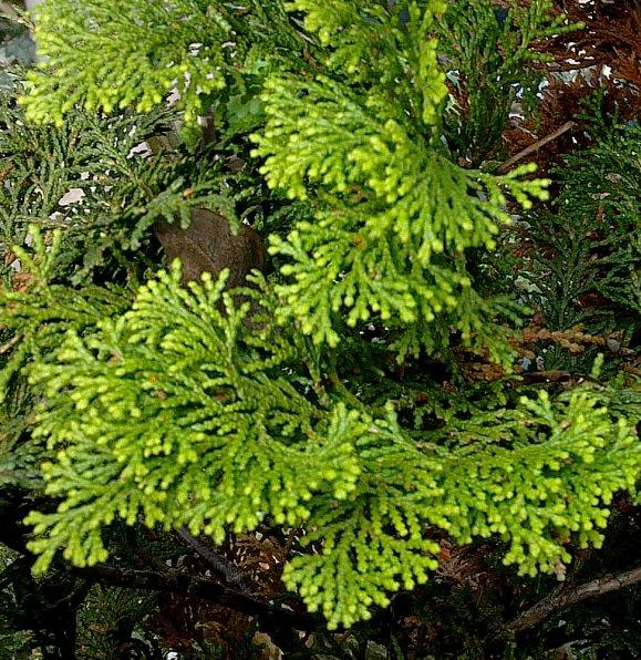 En Automne, il y a aussi de jolis verts...