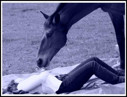 """"""" On ne peut pas prétendre maîtriser un cheval tant qu'on ne se maîtrise pas soi-même """""""
