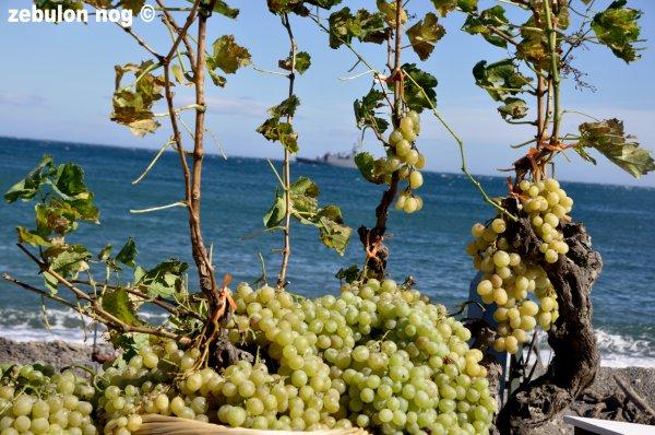16ème Fête des Vendanges de Banyuls Sur Mer