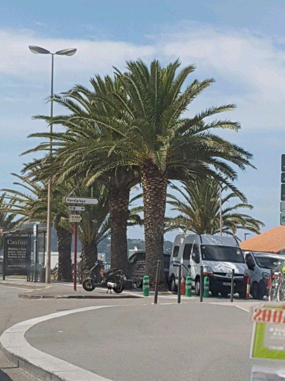 Le soleil ?les palmiers...bientot l ete