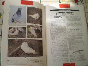 Un manuel de Maladies des Pigeons 191 pages
