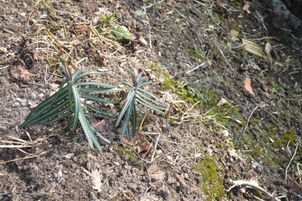 Les taupes cause de dégats dans les pelouses et jardins
