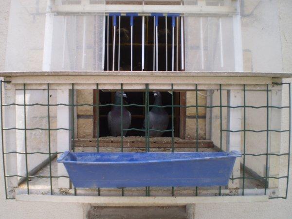 Remplacement des portes par des aérations coulissante avec Possibilité de si abreuver