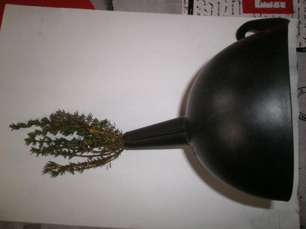 """Petite astuce """" comment mettre une branche de thym les feuilles en bas dans une bouteille de vinaigre de cidre """""""