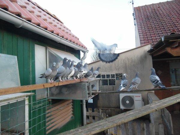 Samedi 31/01/15 // 2 ème sortie des jeunes et visite chez Mr Quignon Sébastien